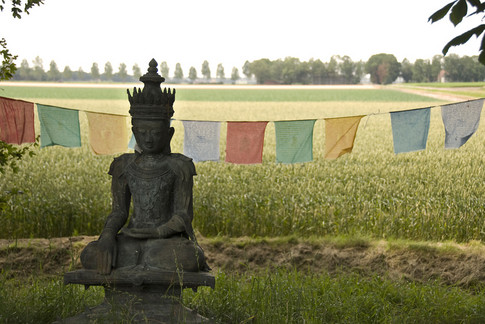 boeddha in de polder