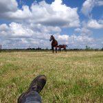 Boer'n boek paarden