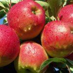Mieke Vervecken zure appels