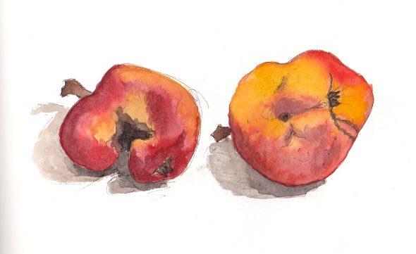 Beter appeltaart zonder e-nummers misvormde appels aquarel Jana