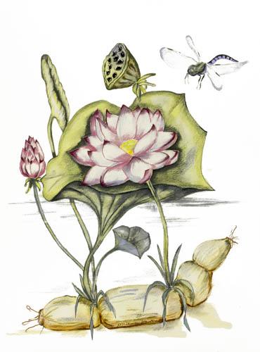 Paula Kuitenbrouwer LotusvoorBoeddhistDagblad