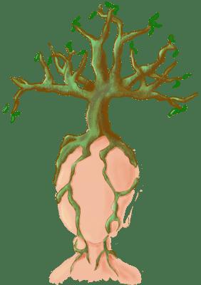 Tekening van een gezicht zonder zintuigen waarop een bonsaiboom groeit