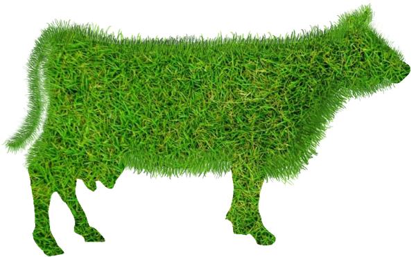 Koe met een vacht van gras.